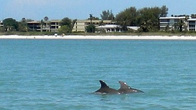 Delfine vor Sanibel by Cape Coral